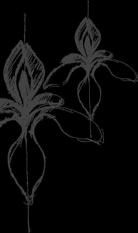 slika-perunike